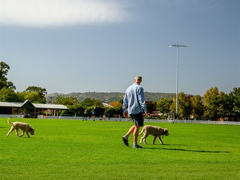 dogs being walked across Unley Oval